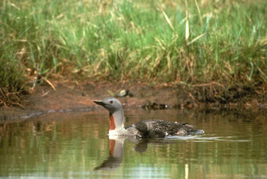 Image credit: U.S. Fish and Wildlife Service