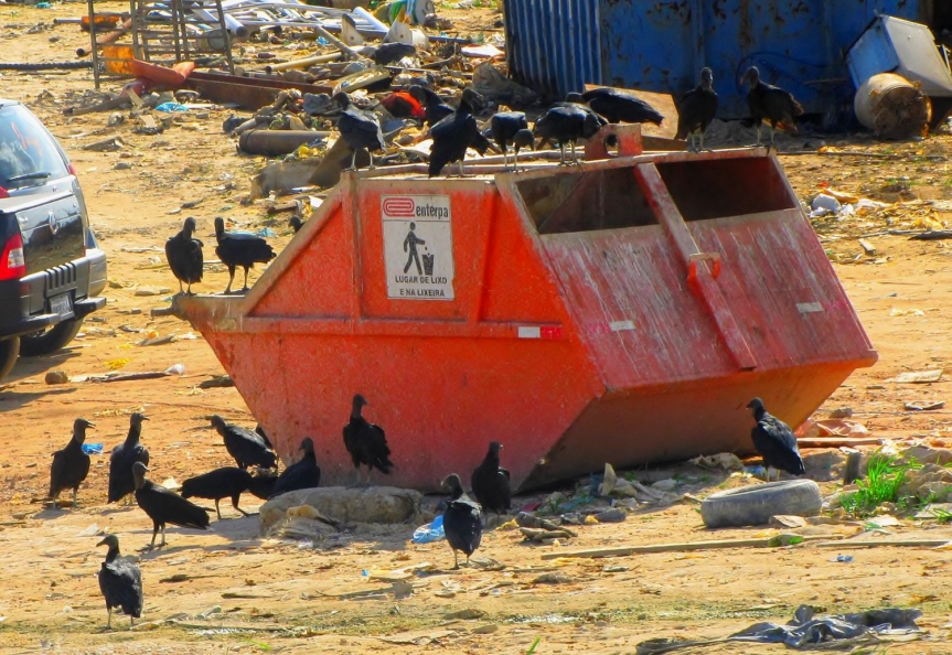 Vultures gather around a dumpster in Manaus. Credit: W. Novaes.