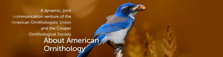 About American Ornithology header image