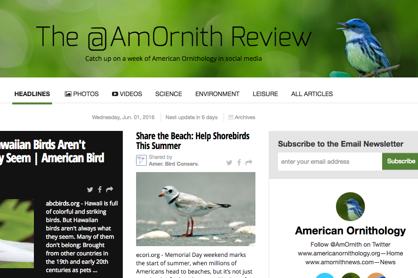 The @AmOrnith Review 06-01-16