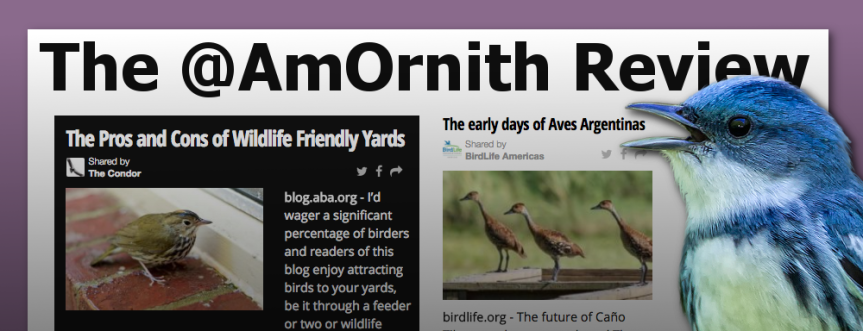 The @AmOrnith Review 08-03-2016