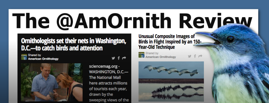 The @AmOrnith Review 8-10-16