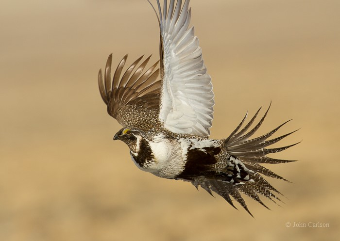 condor-16-178-j-carlson